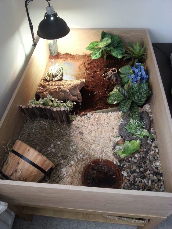 tortoise house - Google Search