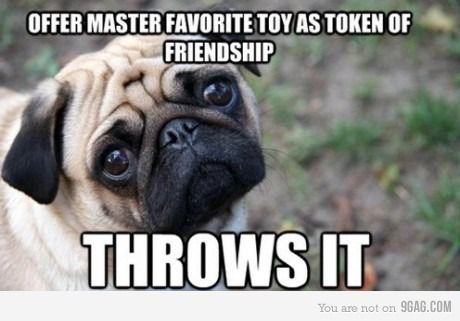 I will never throw a toy again.