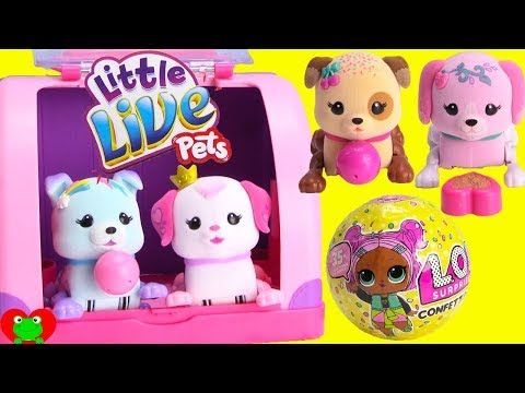 Little Live Pets Lil Cutie Pups Puppy Pawberry Starbow Dog Unboxing Toy Review By Thetoyreviewer Youtube Little Live Pets Pet Toys Playset