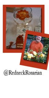February 6, 2012 with @agardendiary @RedneckRosarian All Natural and Easy Growing Roses.Transcript / #gardenchat