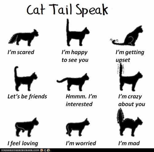 """Cat Tail Speak"" from Fun Cat Facts #81...*I remember that my sweet Buffy did the ""Crazy about you"" tail a lot and I thought it was funny...now I miss it. CLICK to see all 100 Fun Cat Facts...VERY INTERESTING!:"