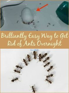 Brilliantly Easy Way to Get Rid of Ants Overnight.  The Borax one didn't work after several tries in different areas.  Trying others soon.