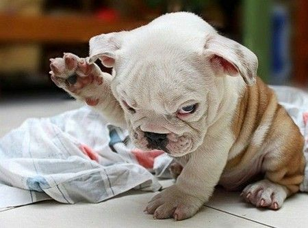 Raise your hand if you ate too many peppermint Jo-Jo's!