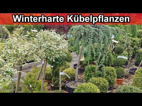 Winterharte Kubelpflanzen Fur Terrasse Balkon Frostfeste Topfpflanzen Fur Den Garten Youtube In 2020 Kubelpflanzen Kubelpflanzen Fur Terrasse Pflanzen