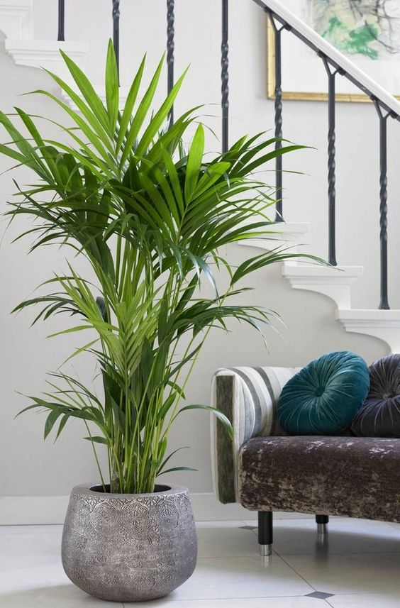 33+ Beauty Indoor Plants Decor Ideas For Your Home And Apartment #apartmenttherapy #apartmentliving #apartmentdecor