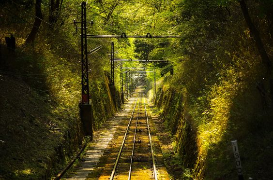 """""""Railway in the forest"""", Mt. Hiei, Japan. By Claudio Beffa. Fine-art print here: http://j.mp/R4ilway"""