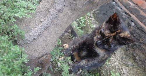 Gambar Kucing Keren Hitam Putih Foto Kucing Kampung Yang Lucu Imut Bagus Keren Warna Hitam Kucing Wallpaper Sc Iphone6splus Pa Kucing Dua Warna Kucing Gambar
