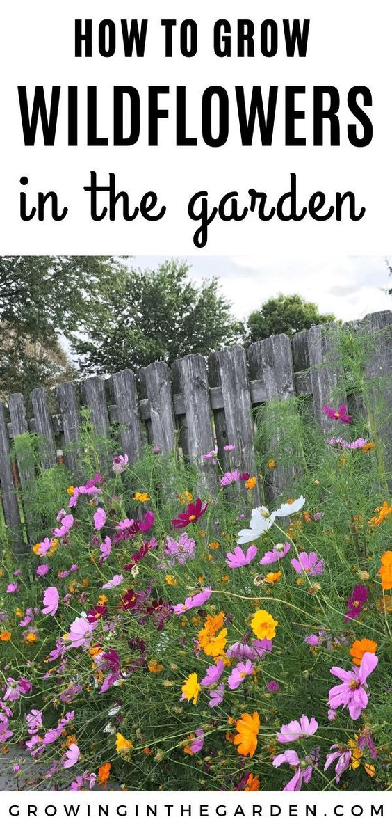 Learn How to Grow Wildflowers. Flowers are a beautiful addition to any backyard garden. | Growing In The Garden #flowergardening #gardeningtips #organicgardening