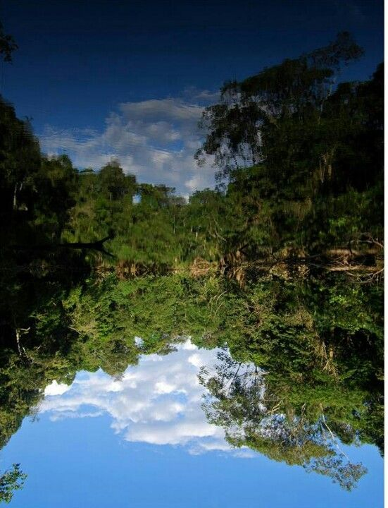 Yasuni' National Forest!