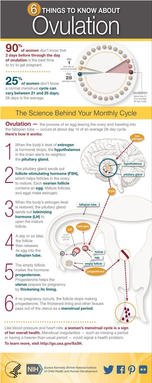 Women's Health Infographic: Ovulation