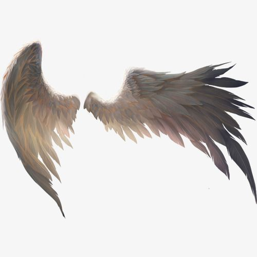Real Wings Wings Clipart Product Kind Dayan Wings Png Transparent Clipart Image And Psd File For Free Download Wings Png Angel Wings Art Wings Drawing