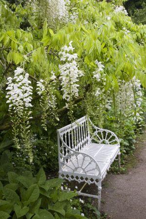Wisteria and bench in Hidcote Manor GardenEnglish Gardens