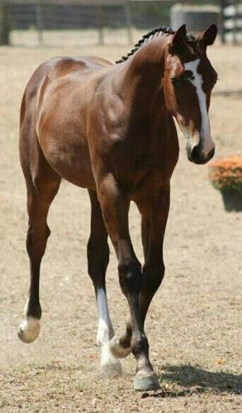 """""""You will be astounded by the difference. I have turned 3 horses completely…"""