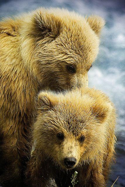 Bears - http://www.facebook.com/pages/Protégeons-les-ours/315306851859572