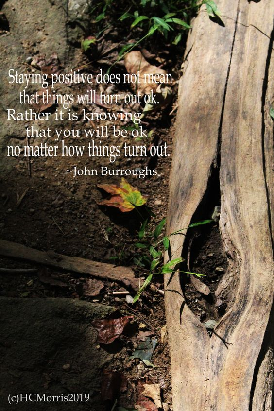 image with a fallen tree on the ground with John Burroughs quote