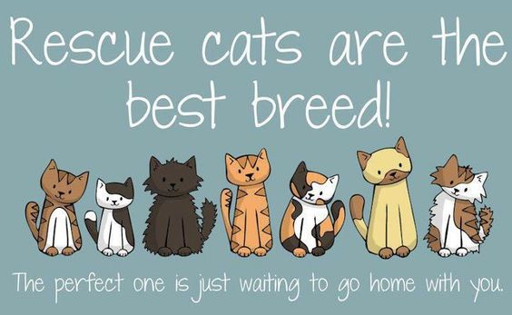 Rescue cats are the best breed!: