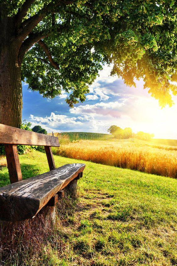 Beautiful summer landscape with wooden bench. At sunset , #AFFILIATE, #landscape, #summer, #Beautiful, #sunset, #bench #ad