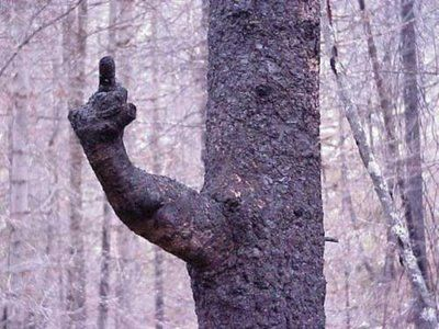 cosas raras del mundo | El mundo y sus cosas raras. - Taringa!: Weird Trees, Funny Pics, Nature, Funny Pictures, Amazing Trees, Middle Finger, Funny Stuff, Funny Tree