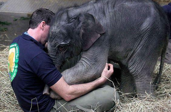 Hug! - Baby elephant Jamuna Toni cuddles with a zookeeper at Munich's Hellabrunn Zoo by Michael Dalder/Reuters, time.com #Elephant #Hellabrunn_Zoo #Michael_Dalder #time_com