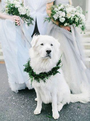 Животные на свадьбе - собака - The-wedding.ru