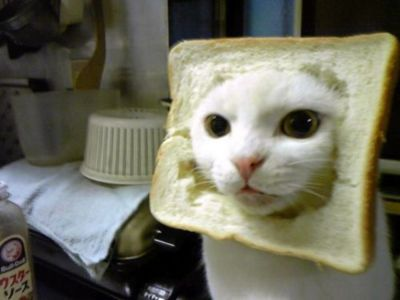 I found my cat, angel, sitting on my loaf of bread so this reminded me of her.