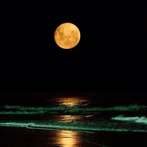 """""""The moon does not fight. It attacks no one. It does not worry. It does not try to crush others. It keeps to its course, but by its very nature, it gently influences. What other body could pull an entire ocean from shore to shore? The moon is faithful to its nature and its power is never diminished."""" - Deng Ming-Dao"""