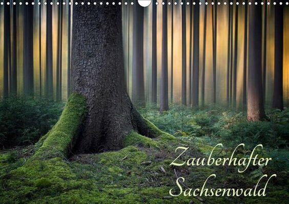 Zauberhafter Sachsenwald - CALVENDO