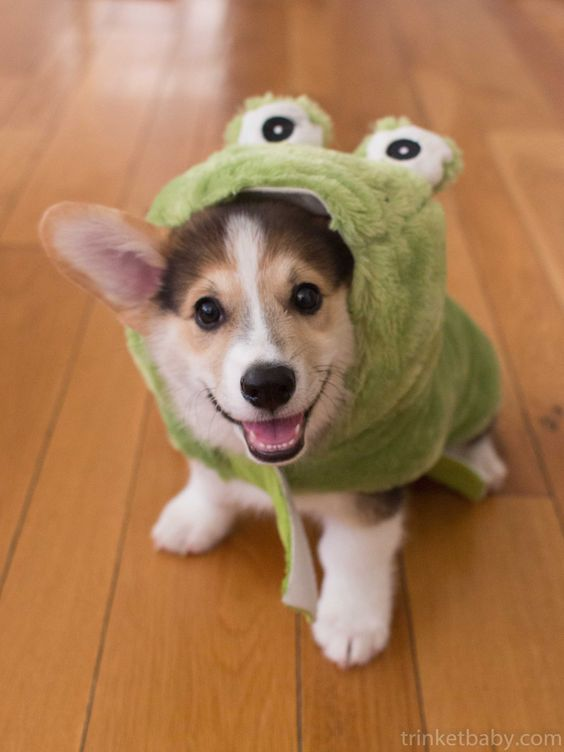 Trigger the frog