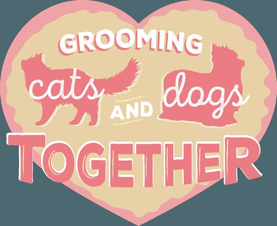 There are approximately 78.2 million dogs and 86.4 million cats owned in the United States. And we pet stylists take care of the grooming needs of many of them. For groomers who work in a shop situ…