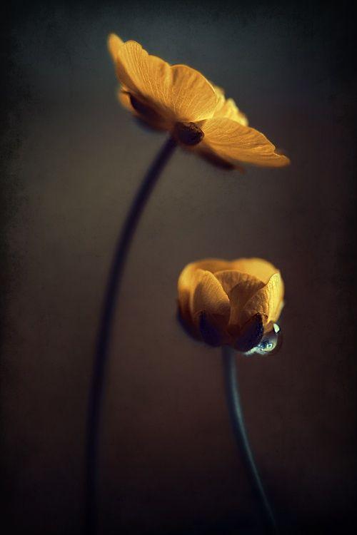 in bloom.