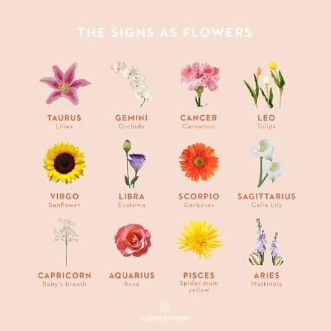 The Perfect Flowers For Each Zodiac Sign In 2020 Zodiac Signs Carnation Flower Online Florist