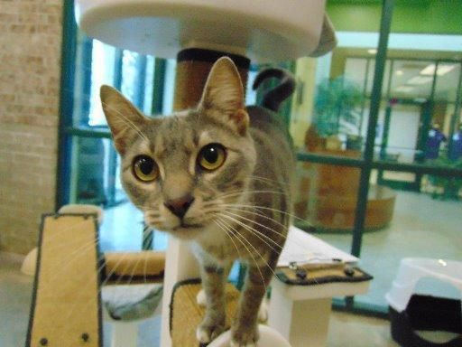 Dogs For Adoption Petfinder Cat Adoption Dog Adoption Pet Adoption