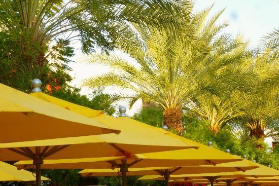 the-saguaro-a-joie-de.jpg (550×367)