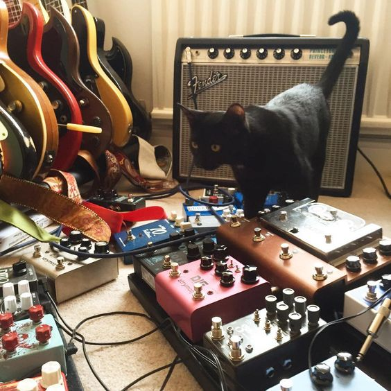 @samatkins78 Tone-Cat Betty checks out his pedal collection. We recommend you do the same on Instagram. It's impressive :D