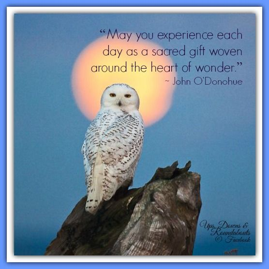 """""""May you experience each day as a sacred gift woven around the heart of wonder."""" ~ John O'Donohue ~"""