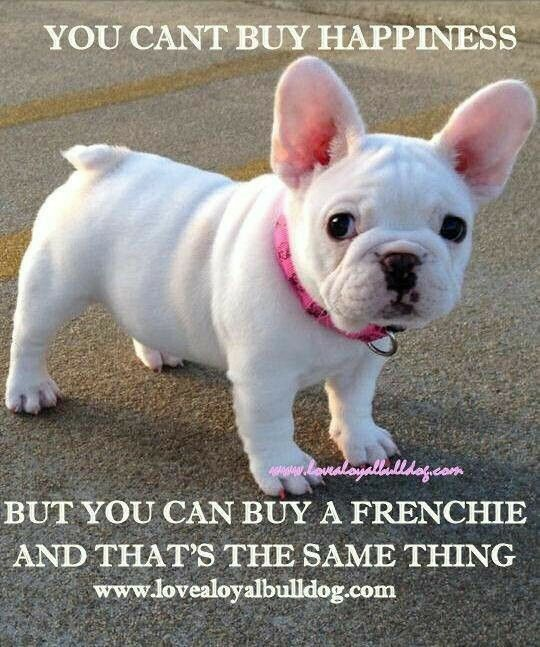 Oh I Can T Wait To Get My Little Girl Cutedogstobuy Frenchies