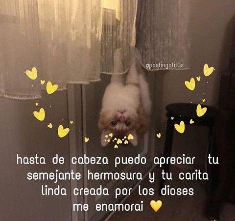 Memes Soft Frases De Quiero Verte Frases Bonitas Memes Romanticos