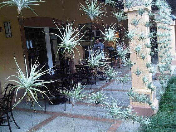 Gardens floating wall and the o 39 jays on pinterest for Air plant wall hanger