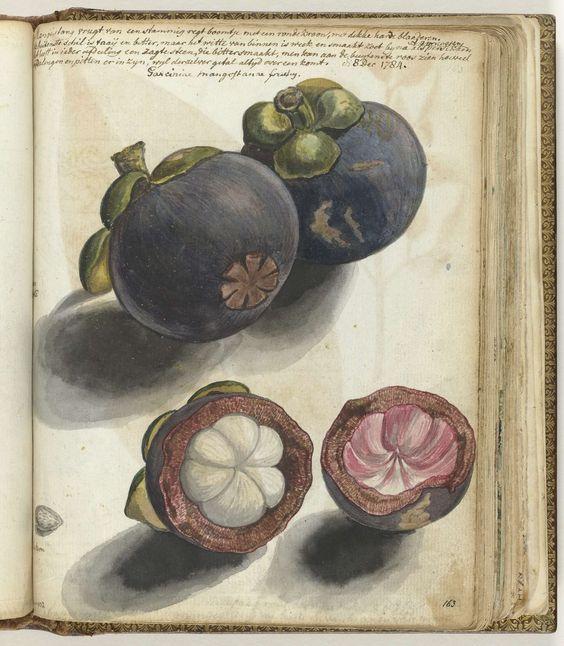 Manggistan, Jan Brandes, 1784: