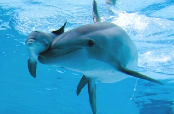 Mom & baby dolphin