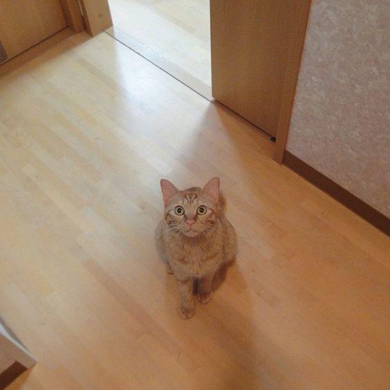 新しい猫じゃらしに注目のさくちゃん - @makoccchan- #webstagram