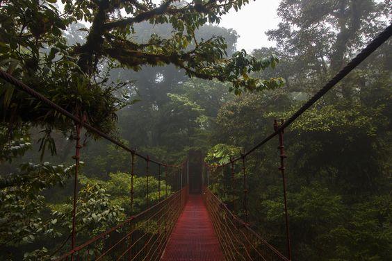 Forêt de nuage de Monteverde |