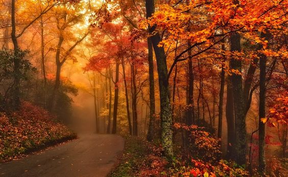 Roaring Fork Motor Trail, Great Smoky Mountains National Park, Tennessee, USA