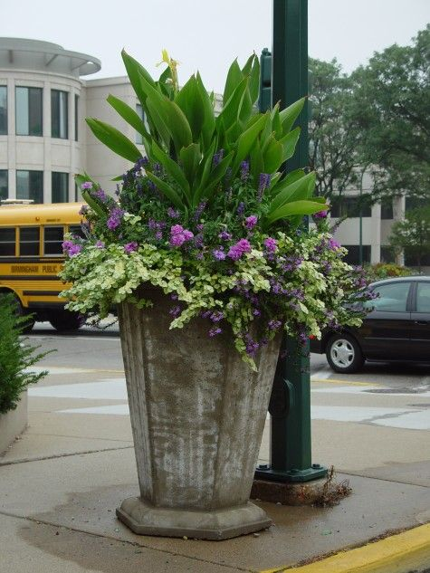 Planters large planters and commercial on pinterest for Large garden planter ideas