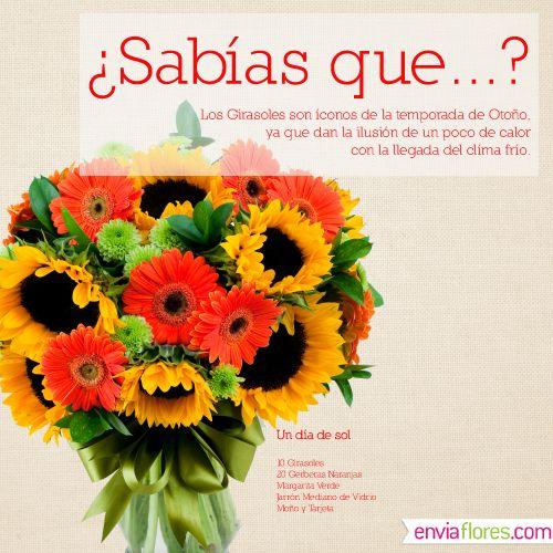 #Girasoles, #EnviaFlores
