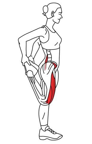 Quadriceps - Common Trigger Point Sites and Referred Pain Maps   Trigger points in the quadricep muscles are commonly the cause of hip, thigh and knee pain.  Th