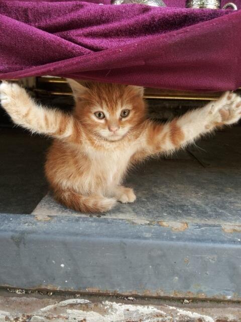 """Come At Me, Bro!"" Photo via Cat's Soup"