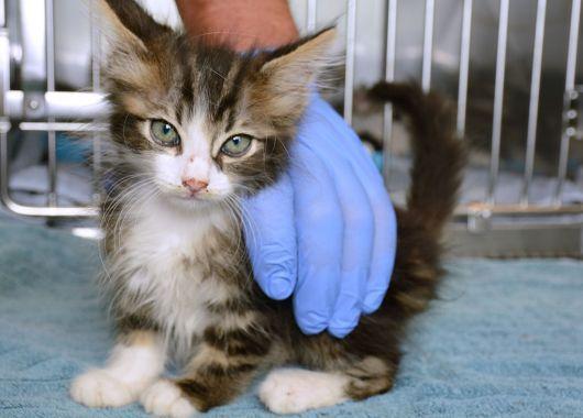 Foster To Surrender Decreasing Kitten Euthanasia Sick Kitten Kittens Newborn Kittens
