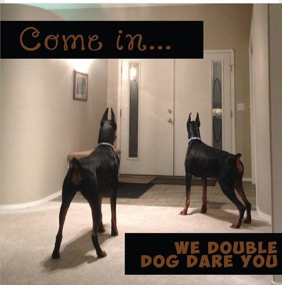 Who's there? #doberman #DREandJUNIOR (Follow on IG @dreandjunior)