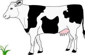 30+ Coiffure vache noire idees en 2021